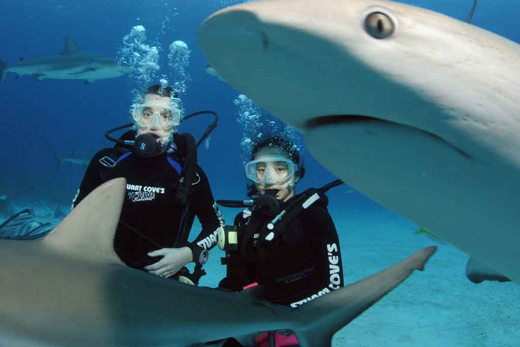 swiming-with-sharks